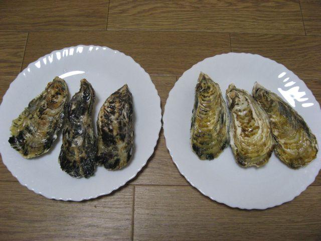 坂越の牡蠣、室津の牡蠣