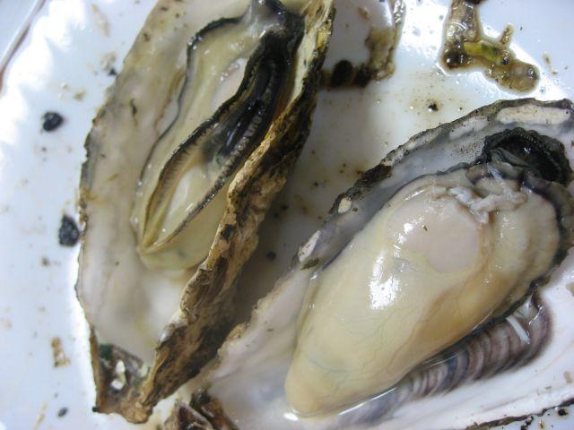 坂越の牡蠣、室津の牡蠣 焼きガキ